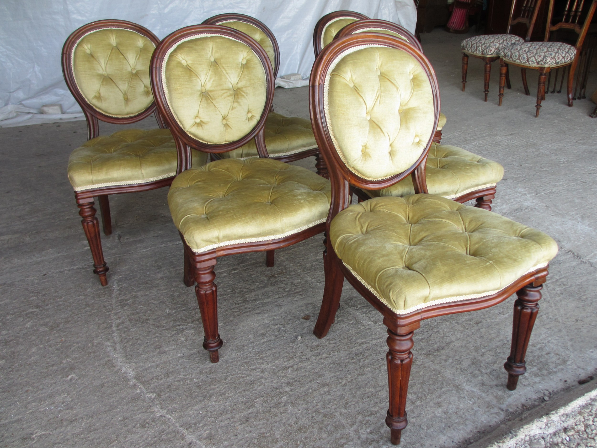 set of 6 quality 19th century dining chairs button upholstered balloon backs with tapered reeded forelegs