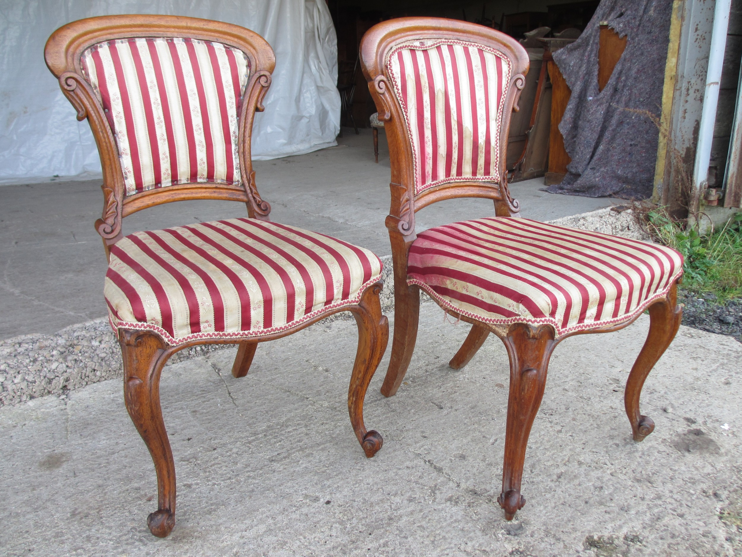 pair 19th century oak upholstered shaped balloon back side dining chairs with scroll carving and cabriole legs