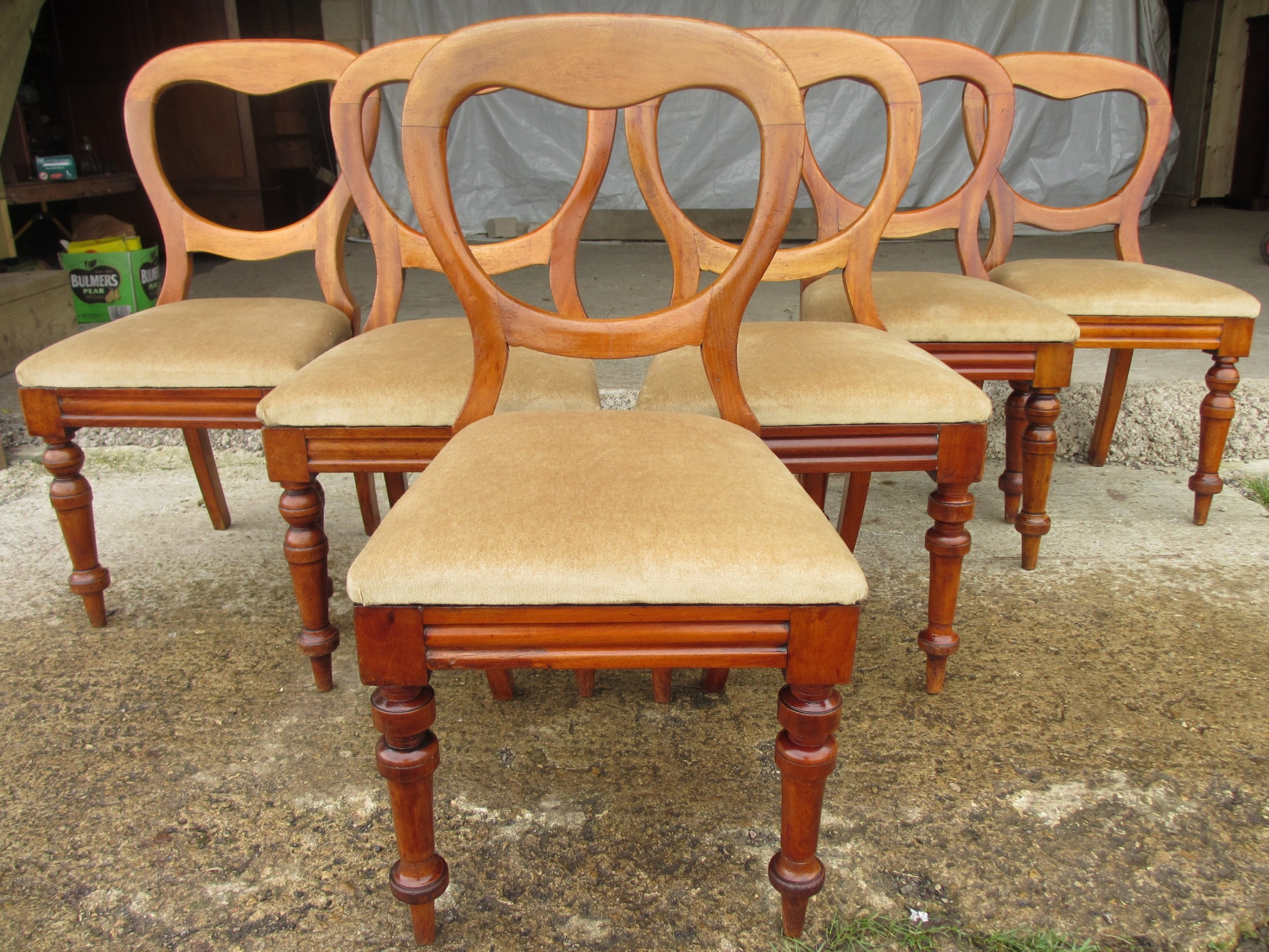 set of 6 victorian walnut balloon back dining chairs